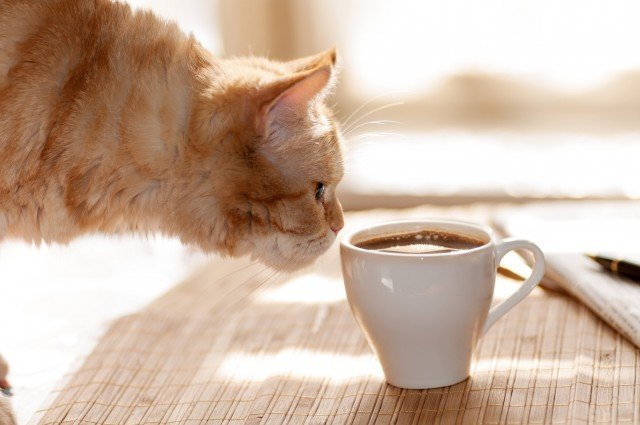 cat_sniffs_mug_coffee