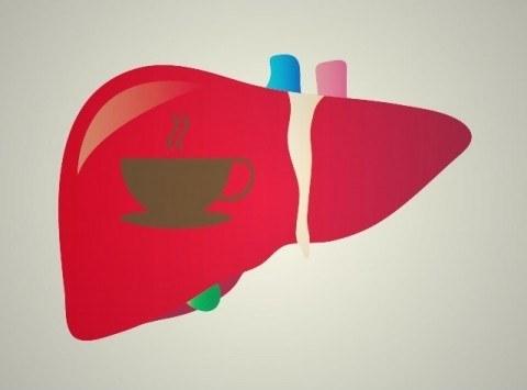 コーヒーと肝臓