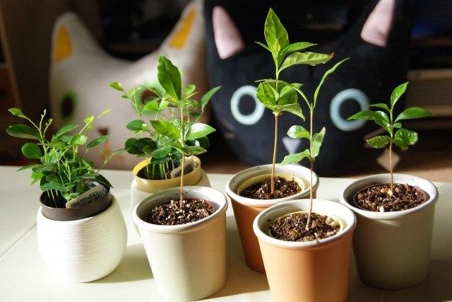 使用後のコーヒー豆の再利用術