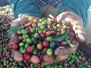 ブラジルコーヒーの歴史