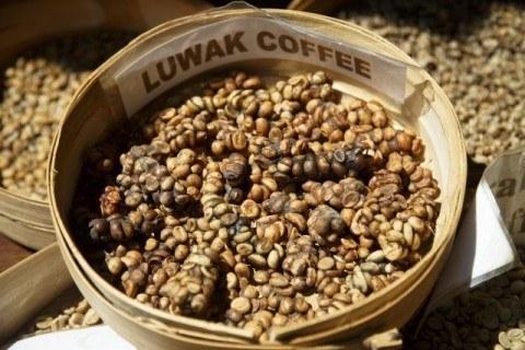luwak_coffee