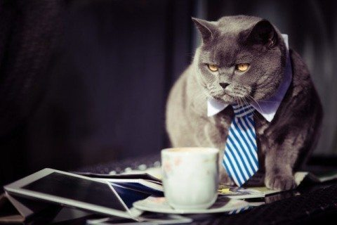 business coffee cat 480x320