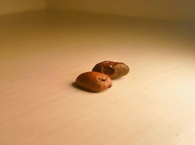 新鮮・高品質なコーヒー豆の探し方_虫食い豆