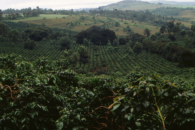 Coffee_plantation_in_Tanzania