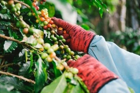 hand keep coffee beans 480x320