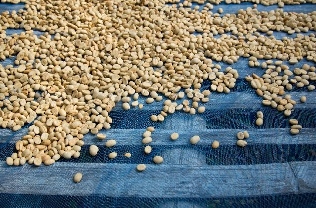 コーヒーの品質を上げる「アフリカンべッド」とは?
