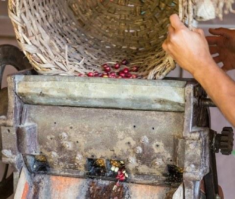 生豆の精選過程で使用する「パルパー」とは?