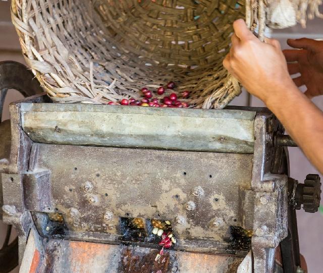 コーヒーの生豆精選過程で使用する「パルパー」とは?
