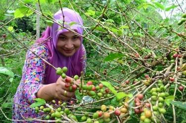 コーヒーの歴史17【植民地支配によるアジアへの普及】