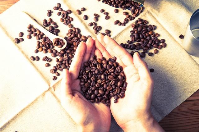 栽培史 大規模栽培 コーヒー豆