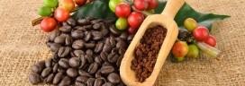 焙煎 コーヒ豆 272x96