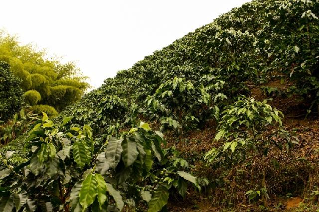 コーヒー農園_テロワール_環境