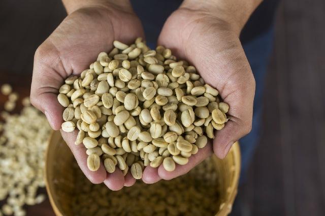 ホワイトコーヒー_超浅煎り_生豆