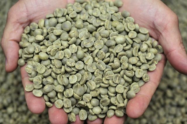 マイルドコーヒー_水洗式_アラビカ種