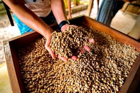 アクアパルプメソッド コーヒー豆 480x320