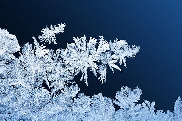 保存方法 冷凍庫