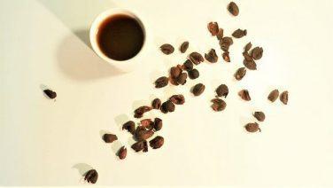 コーヒーの果実茶「カスカラティー」「キシル」とは?