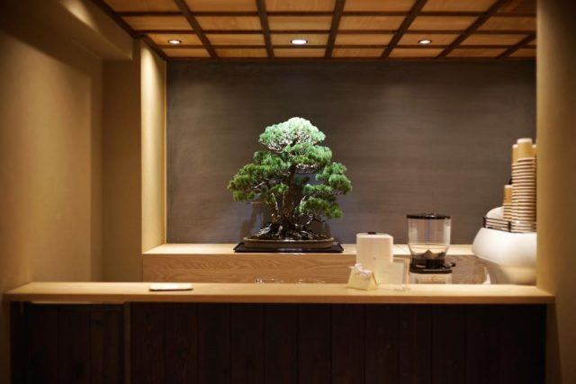 BONGEN COFFEE bonsai